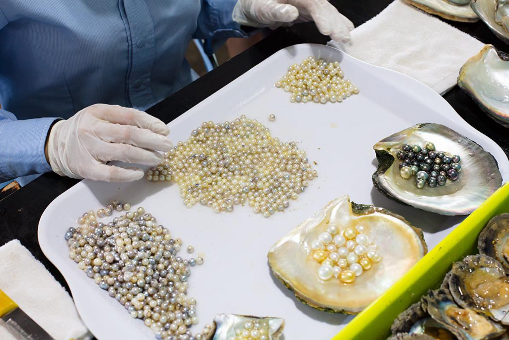 Vietnam is famous for a variety of pearls due to its long coastline advantage