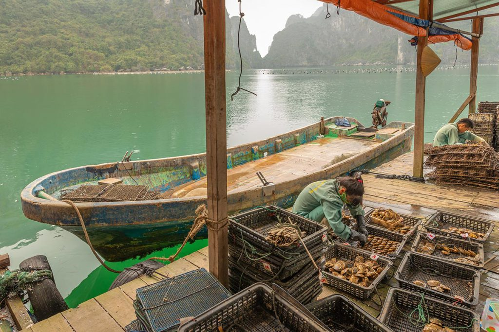 Pearl farm in Halong bay at sunset, Vietnam. UNESCO World Heritage Site