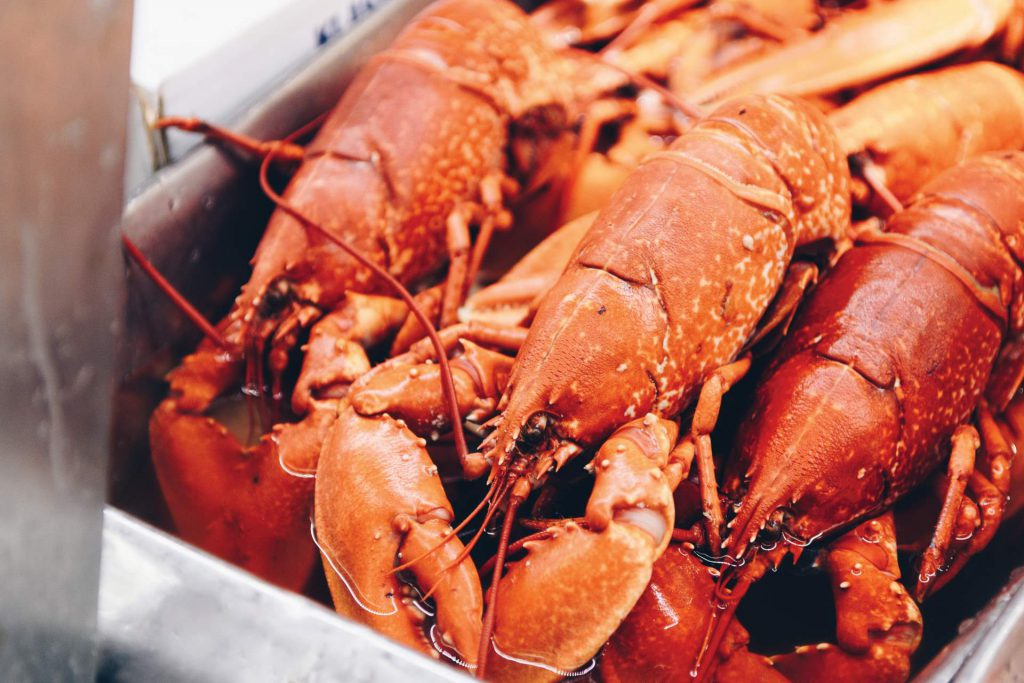Simply boiled lobster from Nova Scotia